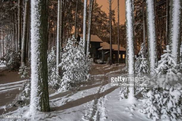 frozen trees in forest during winter - zinchenko stock pictures, royalty-free photos & images