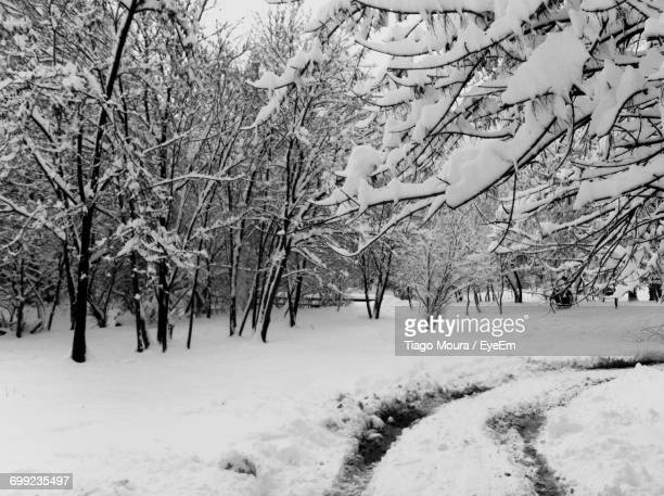 frozen trees on landscape during winter - moura stock photos and pictures