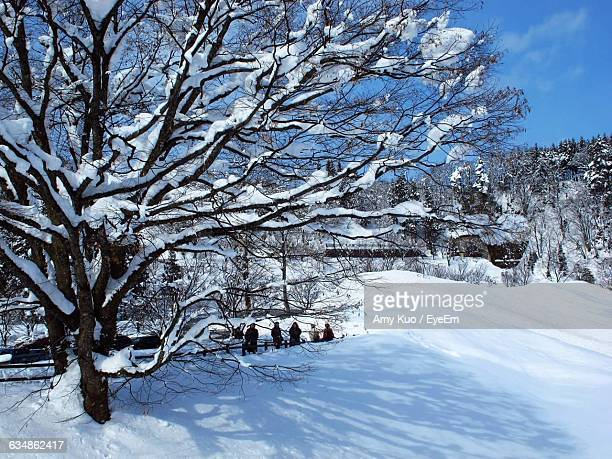 frozen trees on snowy field during winter - amy freeze stock pictures, royalty-free photos & images