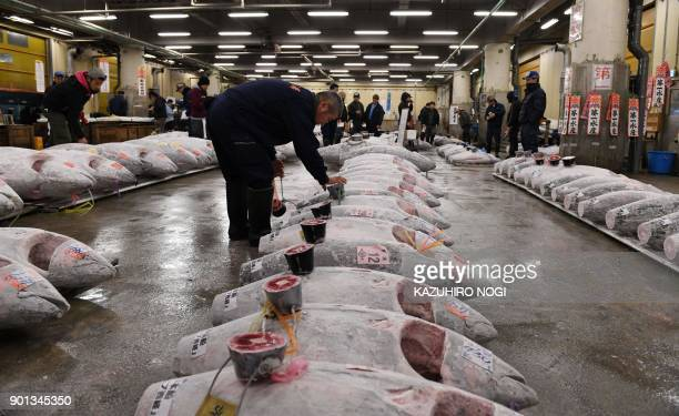 Frozen tuna are seen lined up in rows ahead of the new year's first auction at the Tsukiji fish market in Tokyo on January 5 2018 Tokyo's worldfamous...