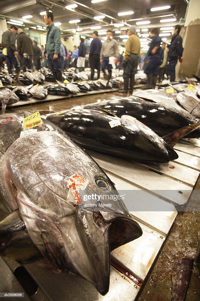 Frozen Tuna on a Market in Tokyo, Japan : Stock Photo