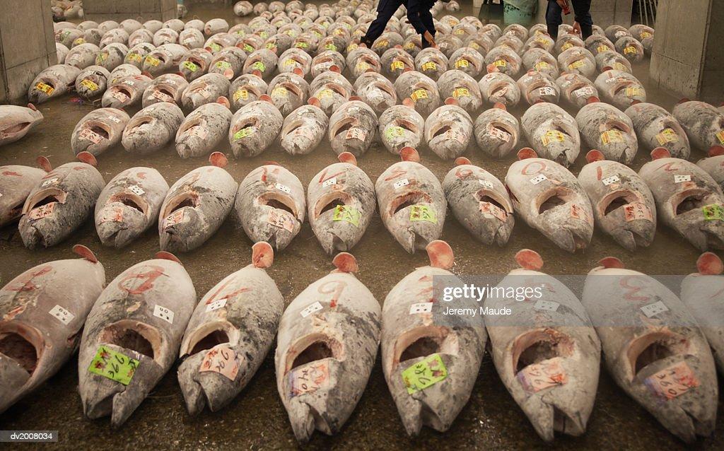 Frozen Tuna on a Market, Tokyo, Japan : Stock Photo