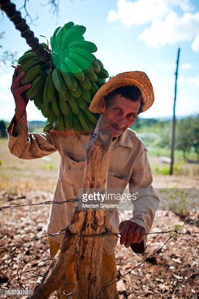 fruit farmer carrying bananas - merten snijders stock pictures, royalty-free photos & images