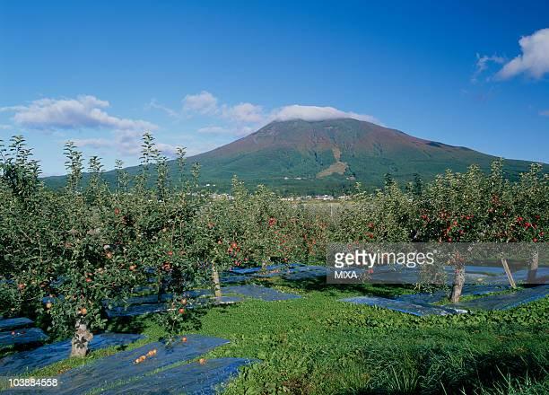 Fruit Firm and Mount Iwaki, Hirosaki, Aomori, Japan