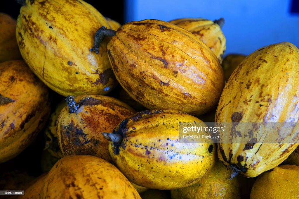 Fruit of cacao Salvador Brazil : Stock Photo