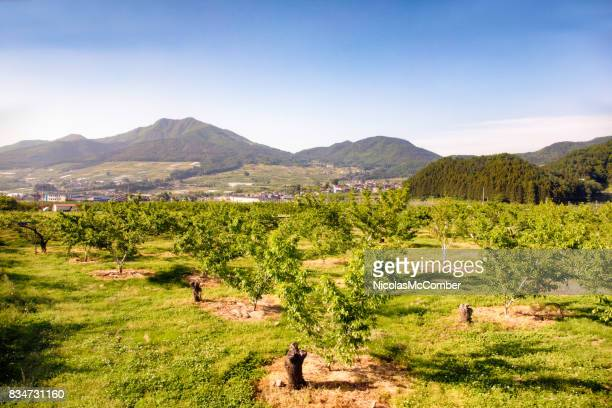 Fruit orchard in Japan Nagano prefecture with mountains