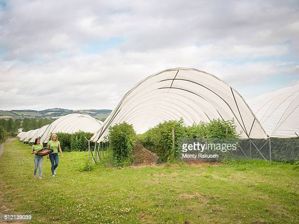 fruit pickers walking past polytunnels on fruit farm - monty rakusen stock pictures, royalty-free photos & images