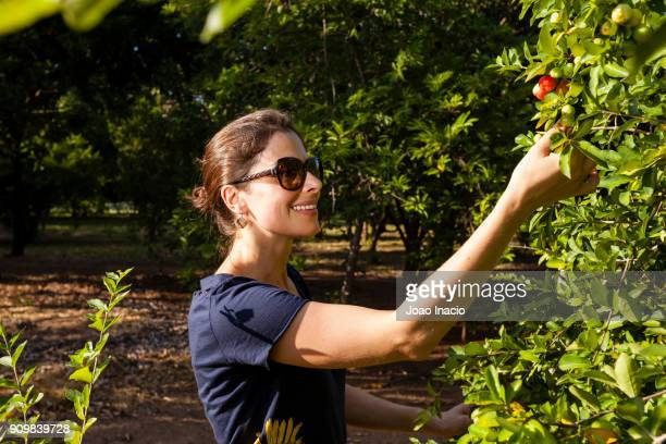 fruit picking - acerola imagens e fotografias de stock