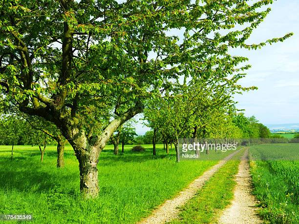 fruit trees in a summer orchard - grove stock pictures, royalty-free photos & images