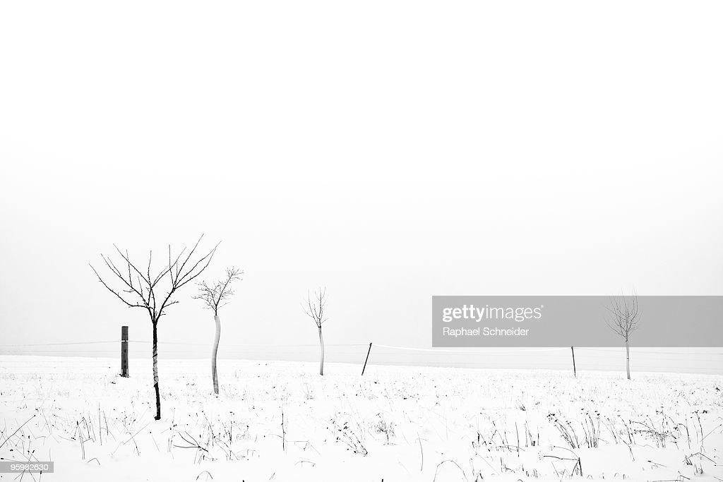 Fruit trees lost in winter fog : Stock-Foto