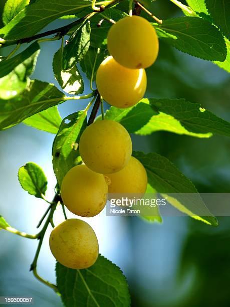 Fruits des beaux jours