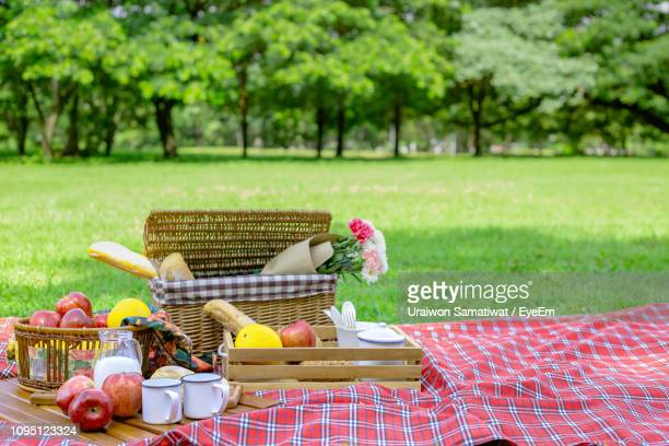 fruits in basket on picnic blanket at park - picnic basket stock pictures, royalty-free photos & images