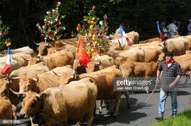 Fête de la transhumance en Aubrac, dans l'Aveyron, le 27 mai 2012, France.