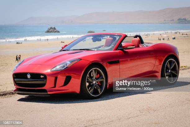 f-type in its natural element - gunnar helliesen stock pictures, royalty-free photos & images