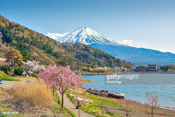 Fuji and Cherry Blossom at Kawaguchiko Lake