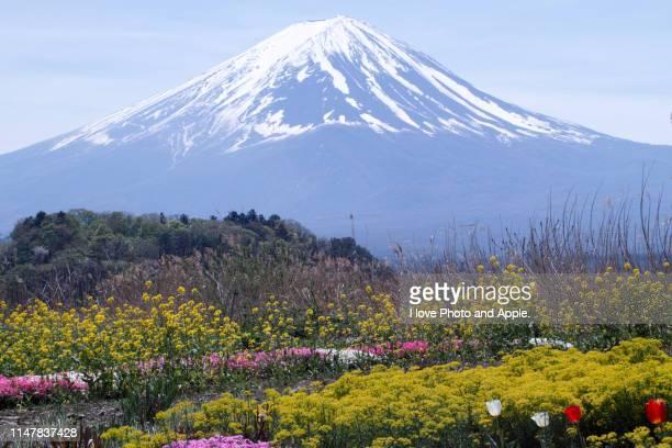 fuji and flowers - 山梨県 ストックフォトと画像