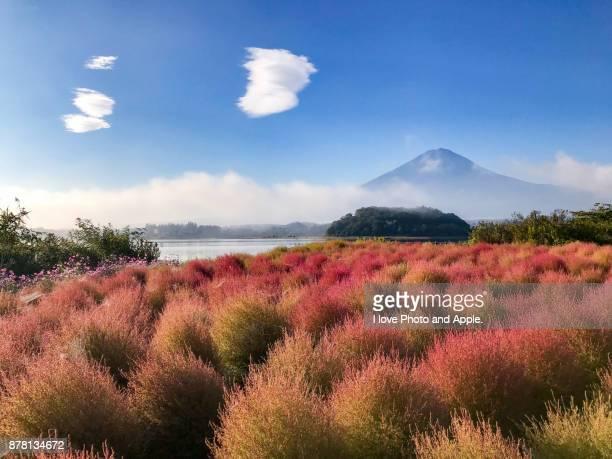 Fuji and Kokia
