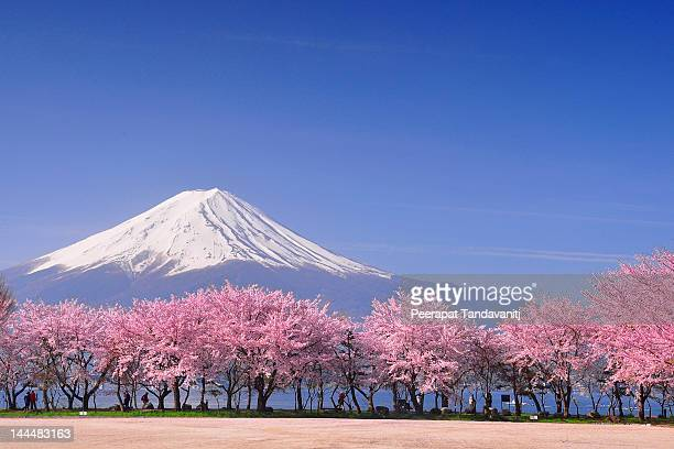 fuji and sakura - japan stockfoto's en -beelden