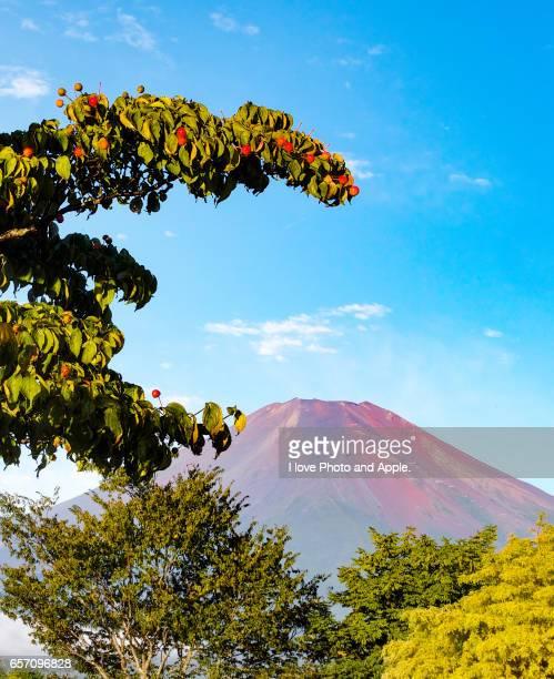 fuji autumn scenery - kousa dogwood stock pictures, royalty-free photos & images