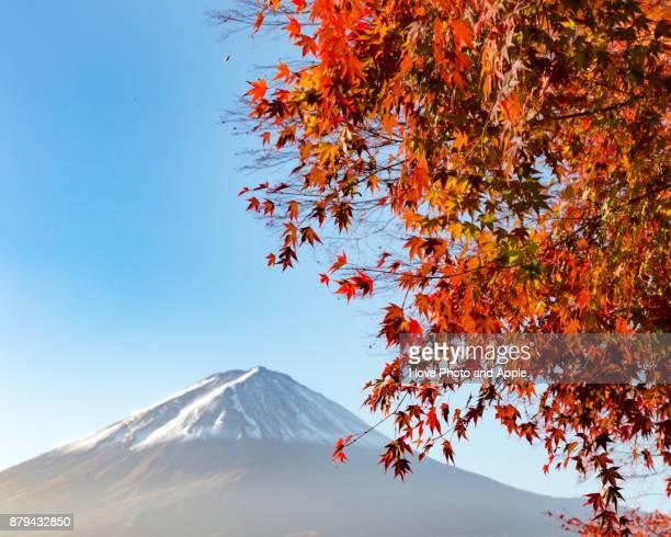 Fuji autumn scenery