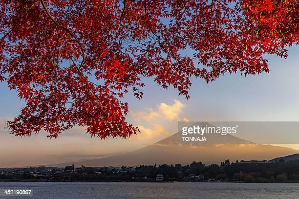 Fuji in autumn season