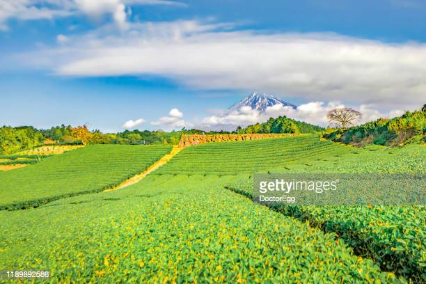 fuji mountain and green tea plantation, fujinomiya, shizuokajapan - 静岡県 ストックフォトと画像