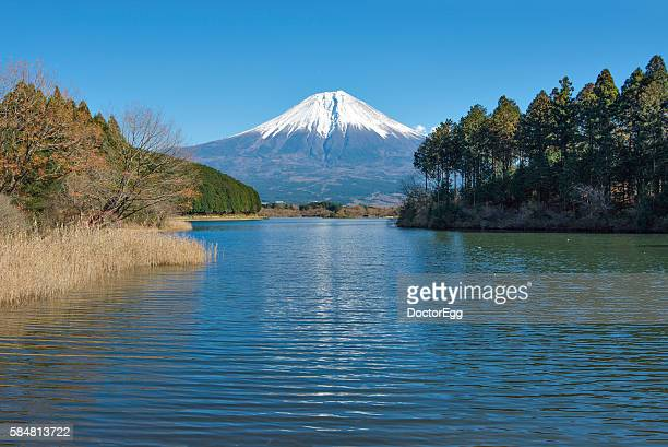 fuji mountain and lake tanuki - marderhund stock-fotos und bilder
