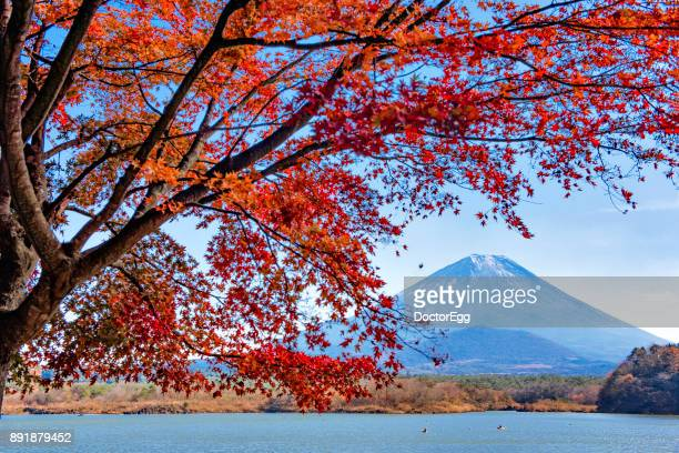 Fuji Mountain and Red Maple Branches at Shoji Lake