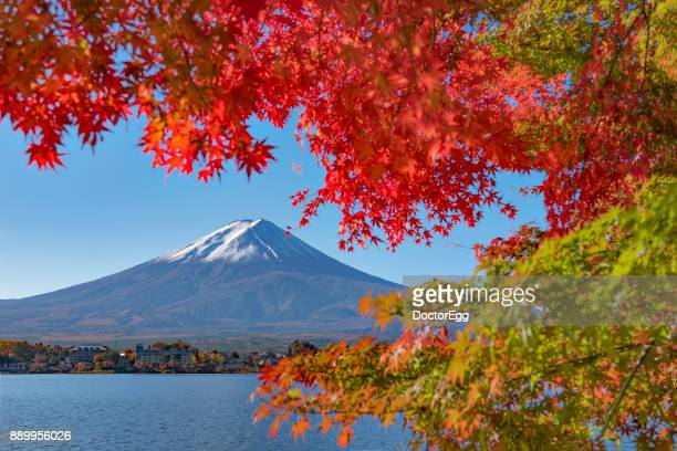 Fuji Mountain and Red Maple Leaves at Kawaguchiko Lake in AUtumn