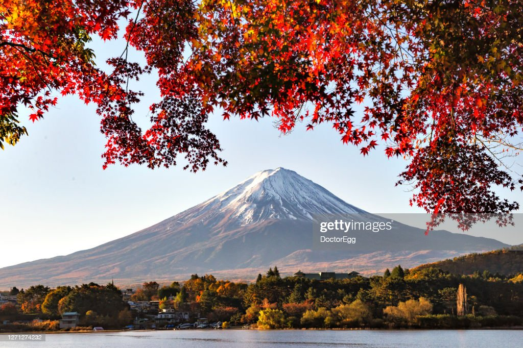 Fuji Mountain and Red Maple Leaves in Autumn at Kawaguchiko lake, Japan : ストックフォト