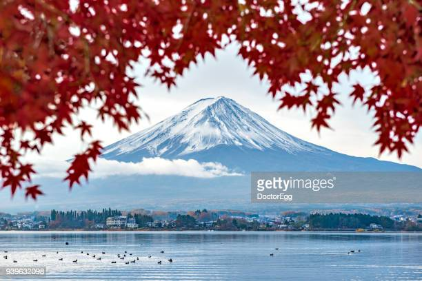 Fuji Mountain and Red Maple Leaves with duck swimming at Lake Kawaguchiko in Morning Cloudy Day