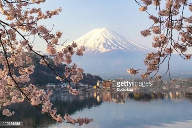Fuji Mountain and Sakura Branches with Fujikawaguchiko City Background at Kawaguchiko Lake, Japan
