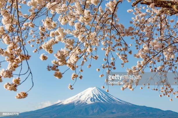 Fuji Mountain and Sakura Cherry Blossom Branches at Kawaguchiko Lake in Spring
