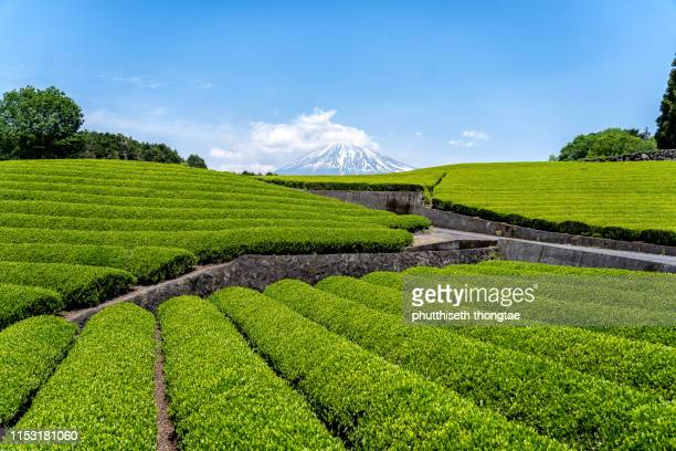 fuji mountain and tea plantation at shizuoka,yamanashi, japan, mount fuji or fujisan located on honshu island, is the highest mountain in japan. - 静岡県 ストックフォトと画像