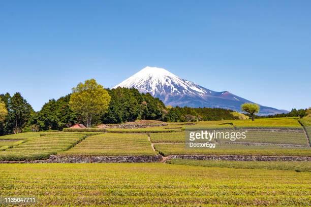 fuji mountain and tea plantation, fujinomiya, shizuoka, japan - 静岡市 ストックフォトと画像