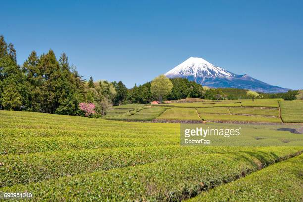 fuji mountain and terrace tea plantation at shizuoka - 静岡県 ストックフォトと画像
