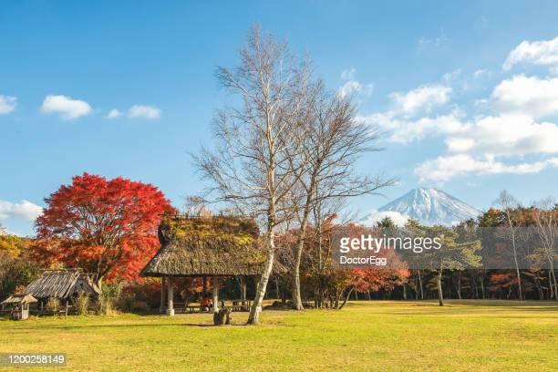 fuji mountain in autumn at saiko wild bird forest park near lake saiko, japan - 埼玉県 ストックフォトと画像