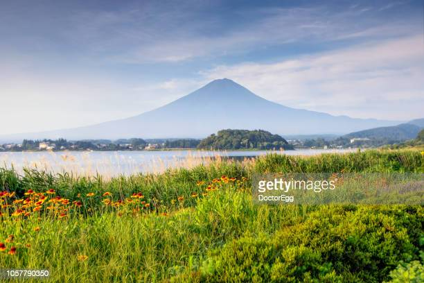 fuji mountain in summer morning at oishi park, kawaguchiko lake, japan - yamanashi prefecture stock pictures, royalty-free photos & images