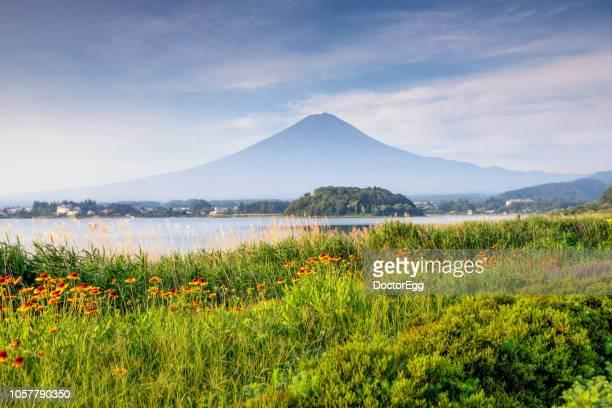fuji mountain in summer morning at oishi park, kawaguchiko lake, japan - 山梨県 ストックフォトと画像