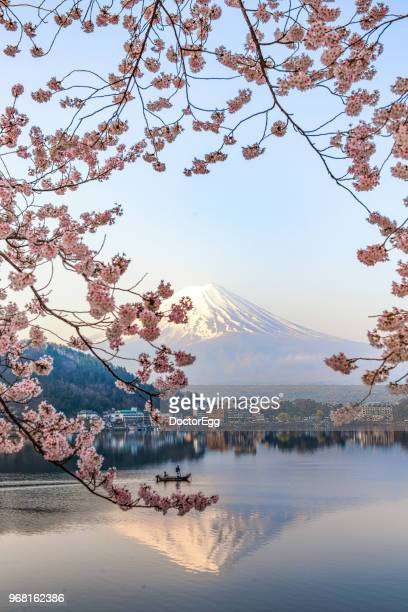 Fuji Mountain Reflection and Pink Sakura Branches at Kawaguchiko Lake