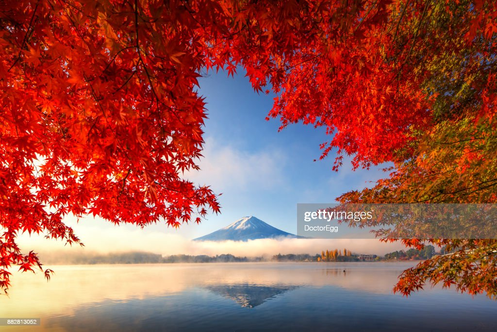 Fuji Mountain Reflection and Red Maple Trees with Morning Mist at Kawaguchiko lake in Autumn : Stock Photo