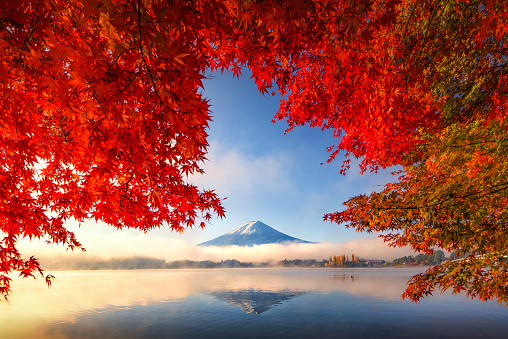 Fuji Mountain Reflection and Red Maple Trees with Morning Mist at Kawaguchiko lake in Autumn - gettyimageskorea
