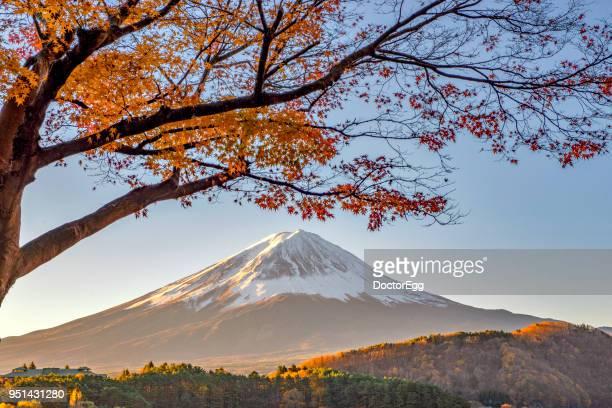 fuji mountain with maple tree in  autumn at kawaguchiko lake - novembro azul - fotografias e filmes do acervo