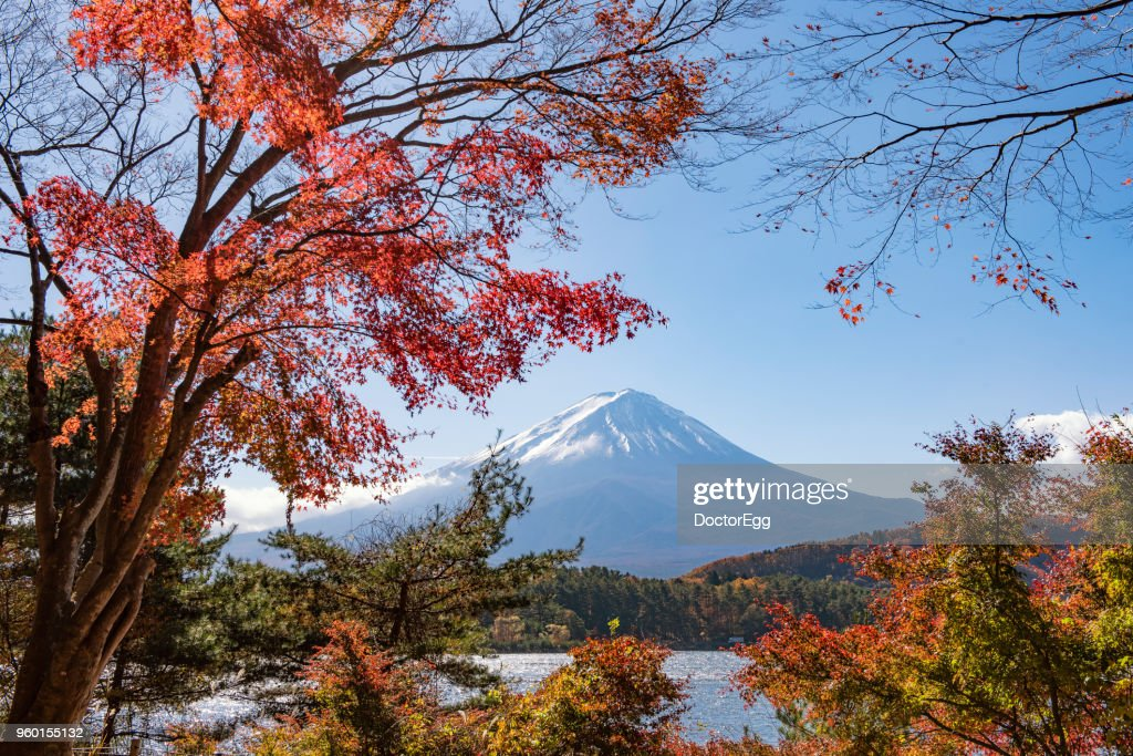 Fuji Mountain with Red Maple Trees along Kawaguchiko Lake in Autumn, Japan : Stock-Foto