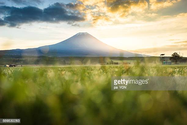 Fuji on grass