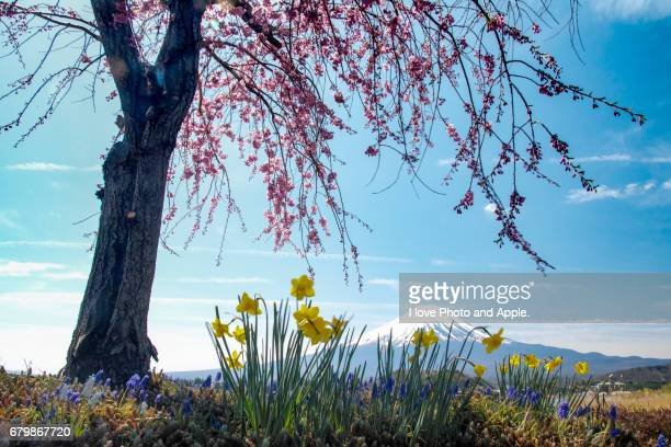 fuji spring view - 湖 stock pictures, royalty-free photos & images