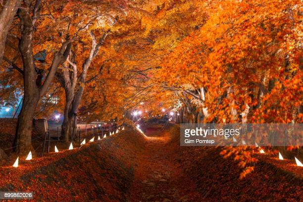Fujikawaguchiko maple corridor