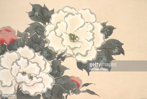 FukamiGusa fromMomoyogusa The World of Things Vol I pub1909 colour block woodcut Peonies