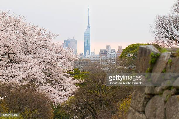 fukuoka tower, cherry blossoms, and castle ruins - fukuoka prefecture stock pictures, royalty-free photos & images