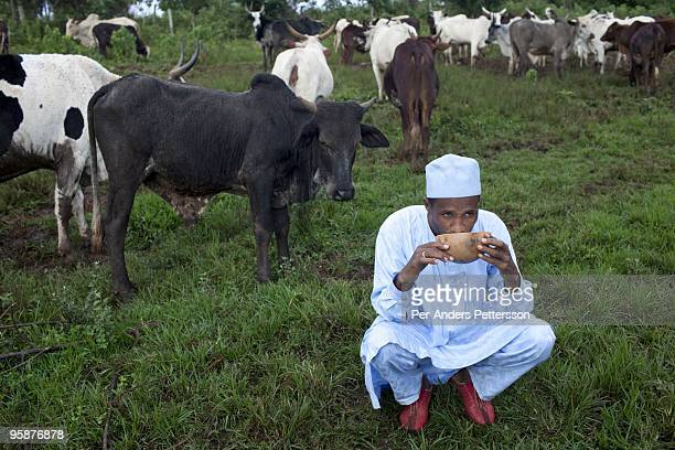 Fulani farmer Wakilu Hamidu Haasam age drinks milk just milked from the family cows on August 9 2009 in Sabgu village Cameroon Many small farmers in...